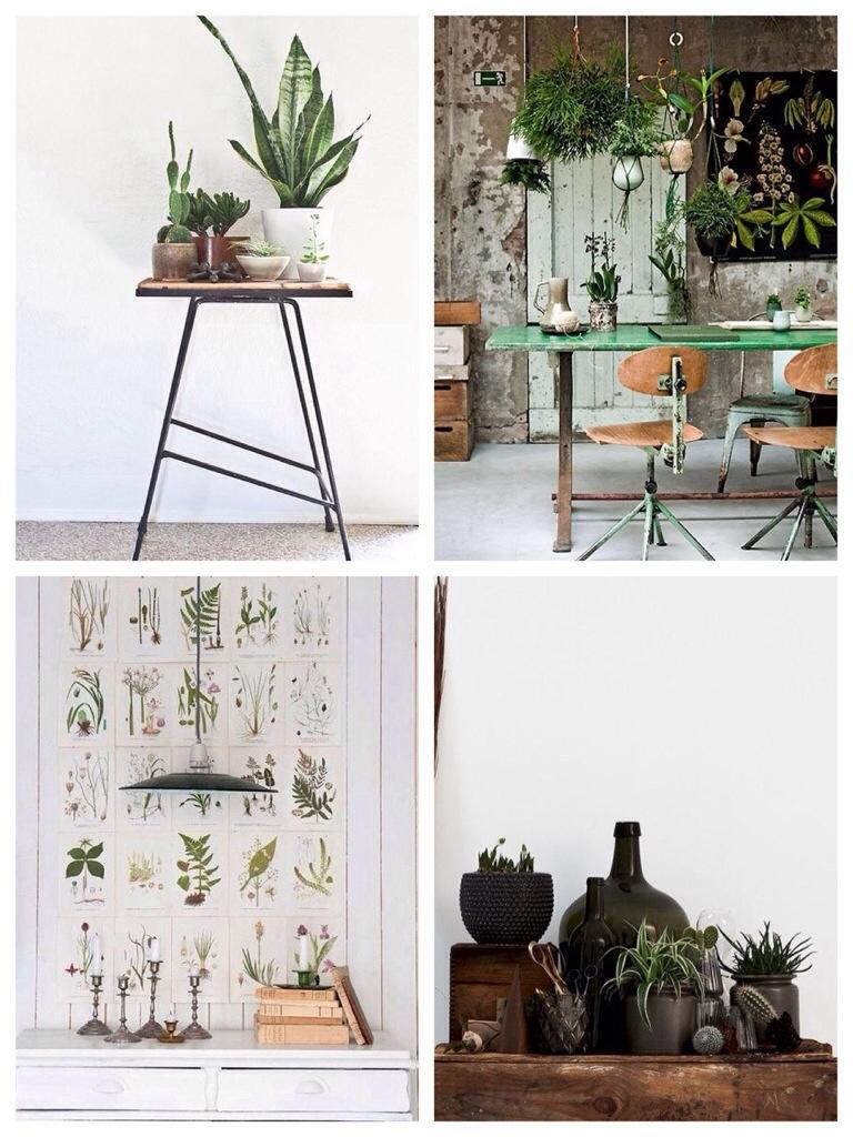 wooninspiratie planten